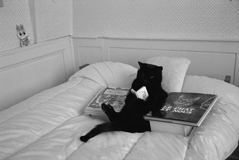 cat-reading-465