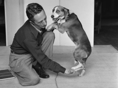 Normal Rockwell posing a beagle for a reference photograph.
