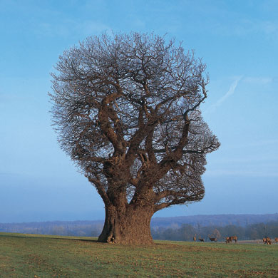 Pink Floyd - Tree of Half Life T-shirt (1997)