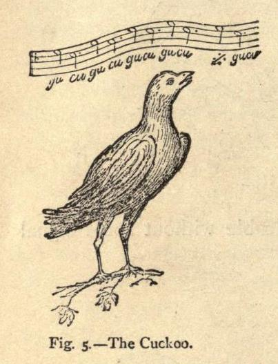 fig-5-the-cuckoo