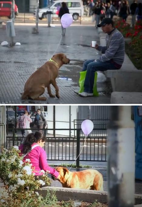 homeless-dogs-human-interest