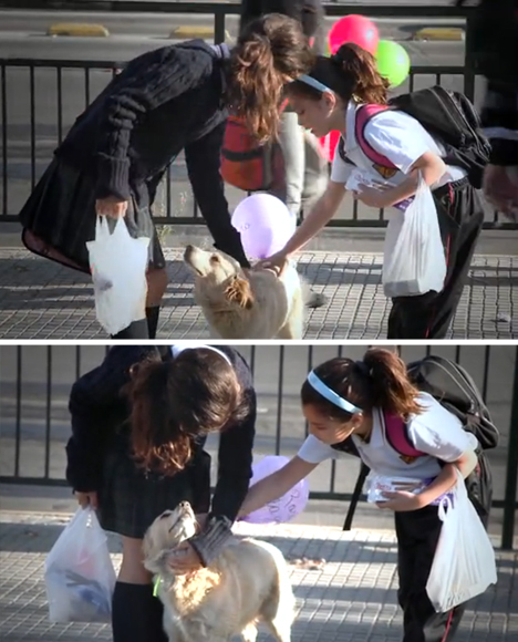 homeless-stray-dog-project