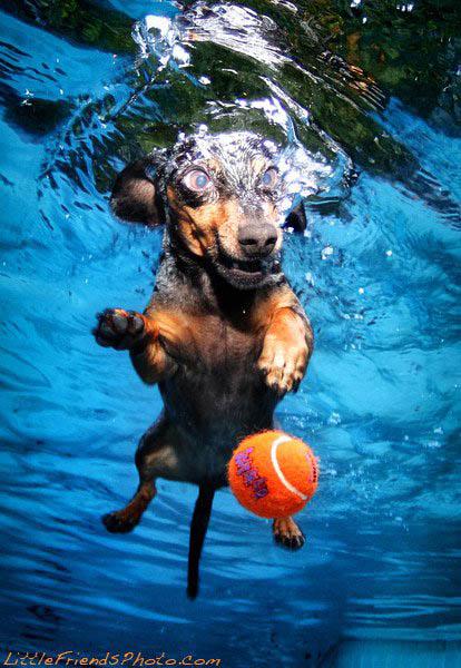 underwater-photos-of-dogs-seth-casteel-1