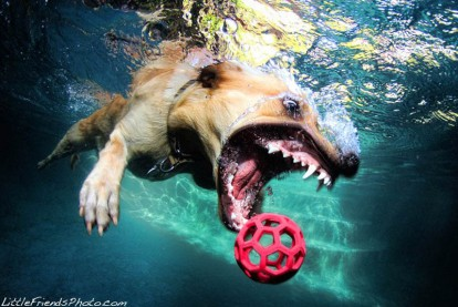underwater-photos-of-dogs-seth-casteel-10