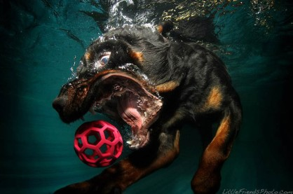 underwater-photos-of-dogs-seth-casteel-11
