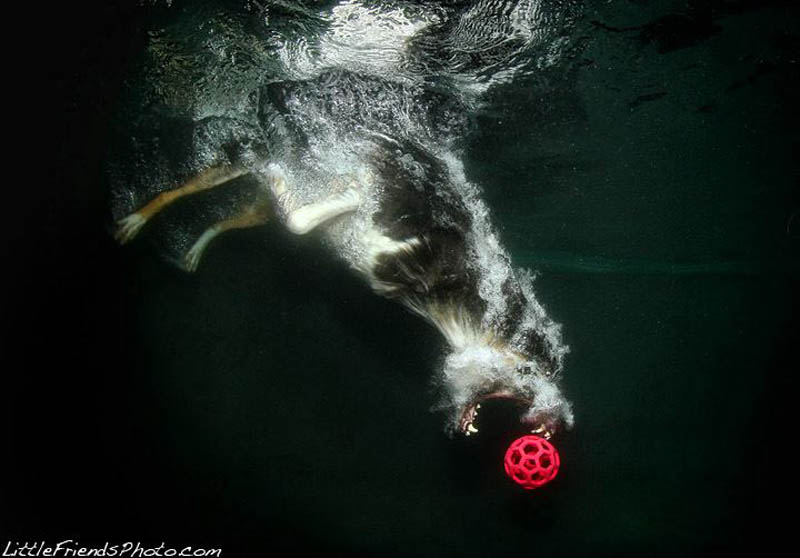 underwater-photos-of-dogs-seth-casteel-12