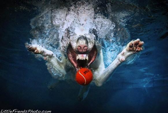 underwater-photos-of-dogs-seth-casteel-2