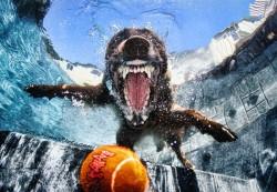 underwater-photos-of-dogs-seth-casteel-3