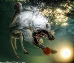 underwater-photos-of-dogs-seth-casteel-4