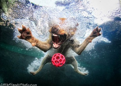 underwater-photos-of-dogs-seth-casteel-5