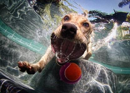 underwater-photos-of-dogs-seth-casteel-6