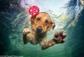 underwater-photos-of-dogs-seth-casteel-8