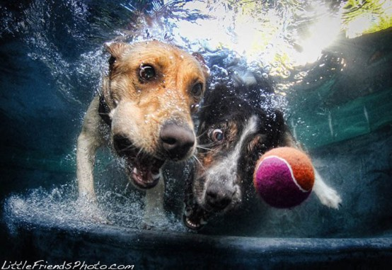 underwater-photos-of-dogs-seth-casteel-9