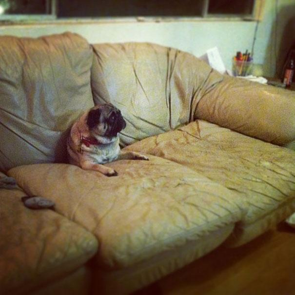 funny-cats-dogs-stuck-furniture-11