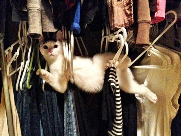 funny-cats-dogs-stuck-furniture-13