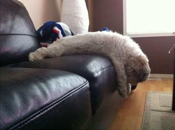 funny-cats-dogs-stuck-furniture-35