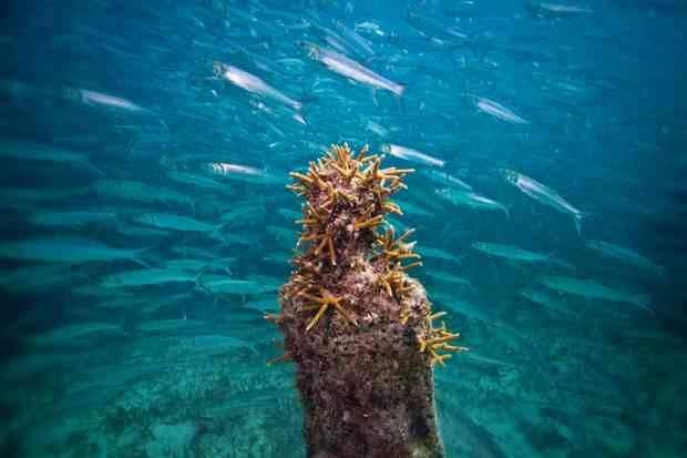 underwater-museum-book5-lgn