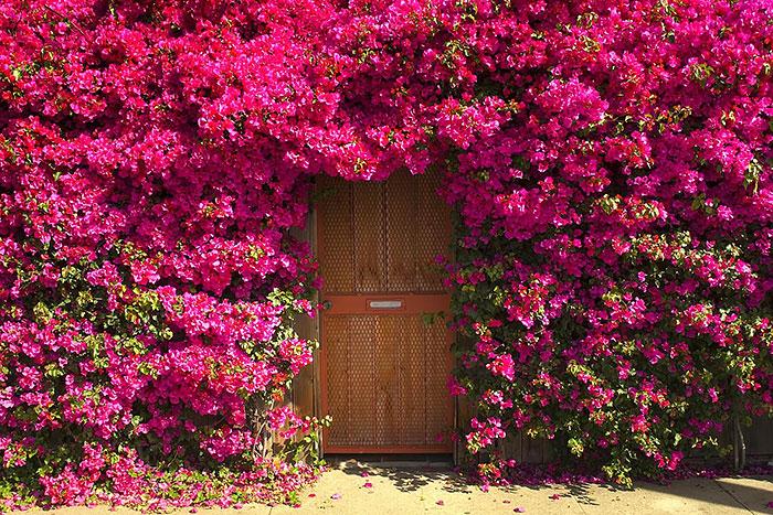 Unknown Garden Door
