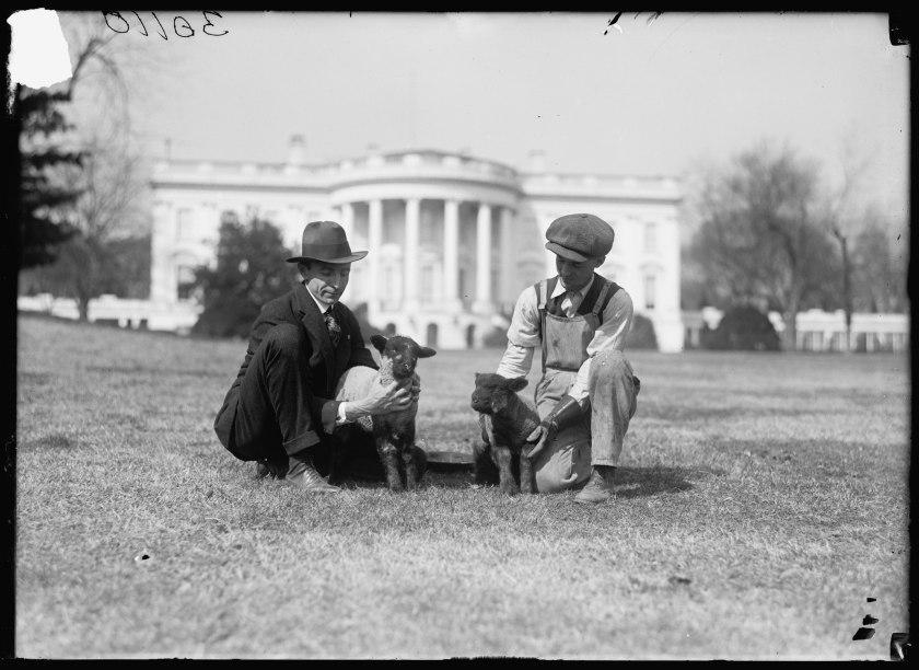 White-House-lambs-1916-1919 (1)