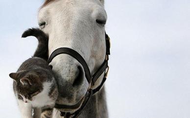 Beautiful-Horse-horses-22410531-1280-800
