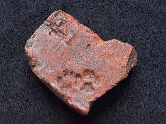 fragment-Roman-animal-print