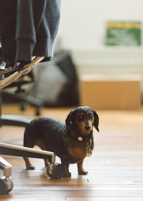 etsy-officedogs-companyculture-e1414773377507