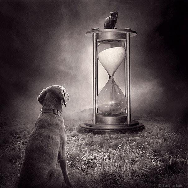 surreal-photoshop-images-shelter-animals-sarolta-ban-10