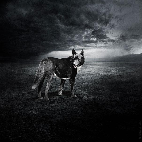 surreal-photoshop-images-shelter-animals-sarolta-ban-2