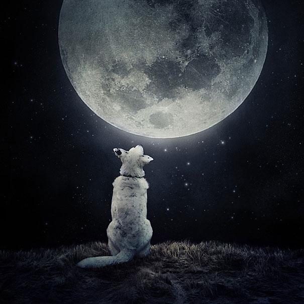 surreal-photoshop-images-shelter-animals-sarolta-ban-8