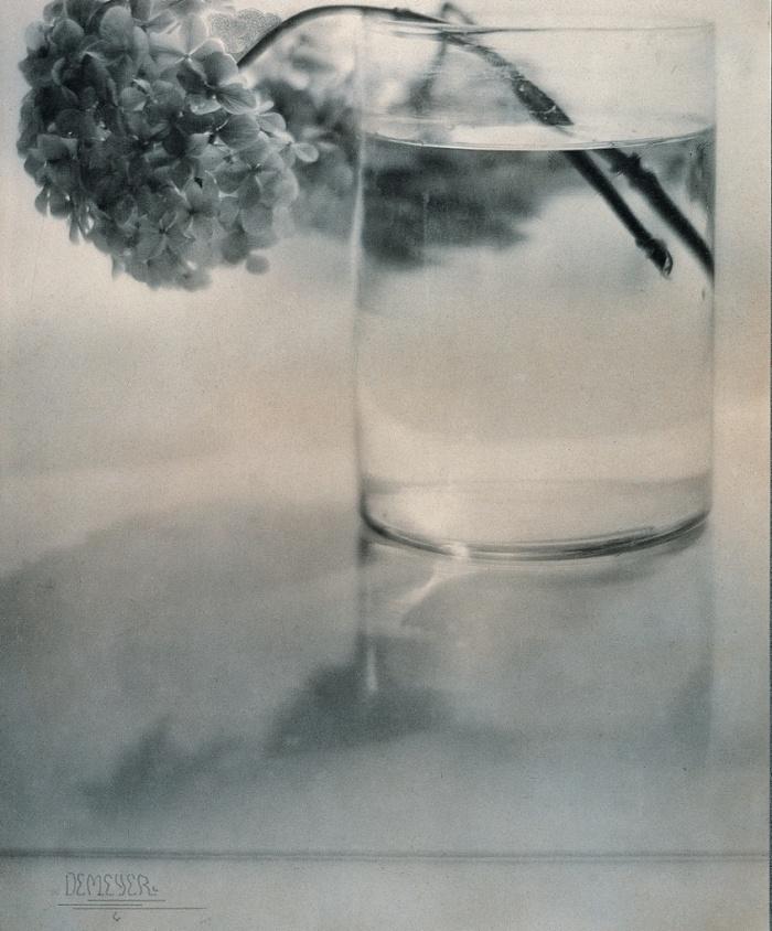 Νεκρή φύση, Ορτανσία, 1907, Βαρώνος Αντόλφ ντε Μεγιέρ (Adolph de Meyer). Ο ντε Μεγιέρ έκανε αργότερα καριέρα στη Νέα Υόρκη, στα περιοδικά Vogue και Vanity Fair. Ο διάσημος φωτογράφος Σέσιλ Μπίτον τον αποκαλούσε «Ντεμπισύ της φωτογραφίας».