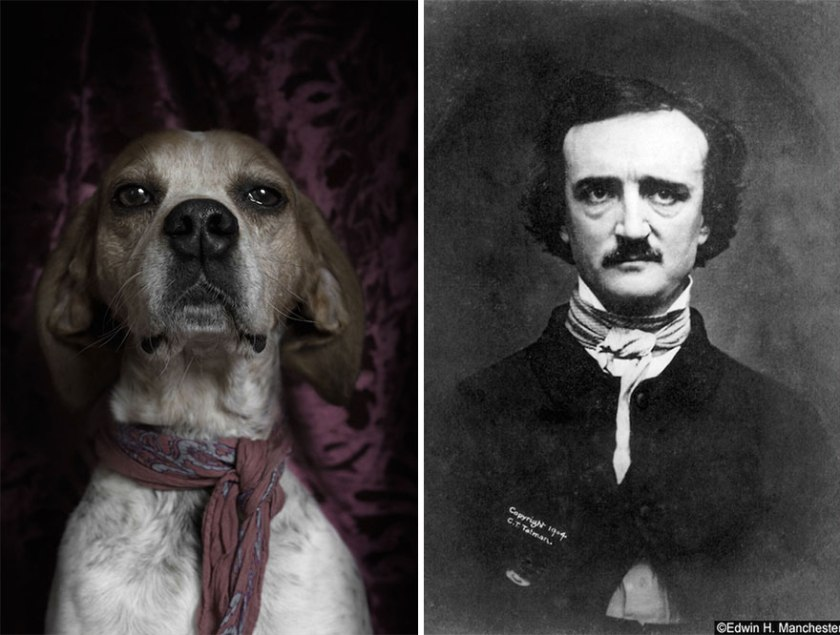 poetic-dogs-dan-bannino-14