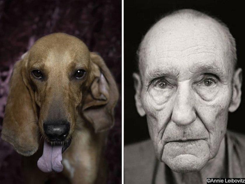 poetic-dogs-dan-bannino-2
