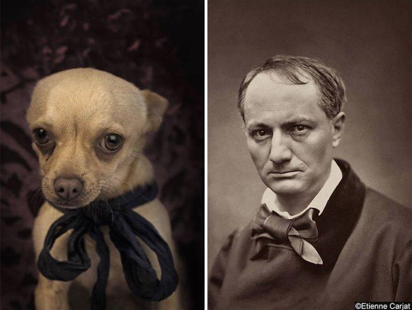 poetic-dogs-dan-bannino-5