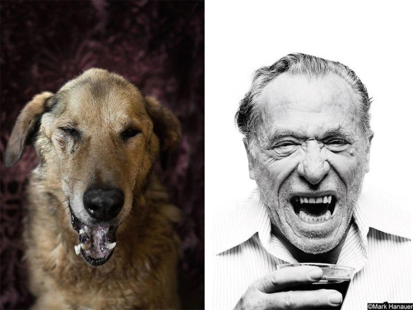 poetic-dogs-dan-bannino-7