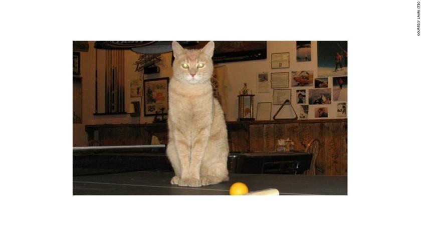120717064055-stubbs-the-cat-mayor-of-talkeetna-horizontal-large-gallery
