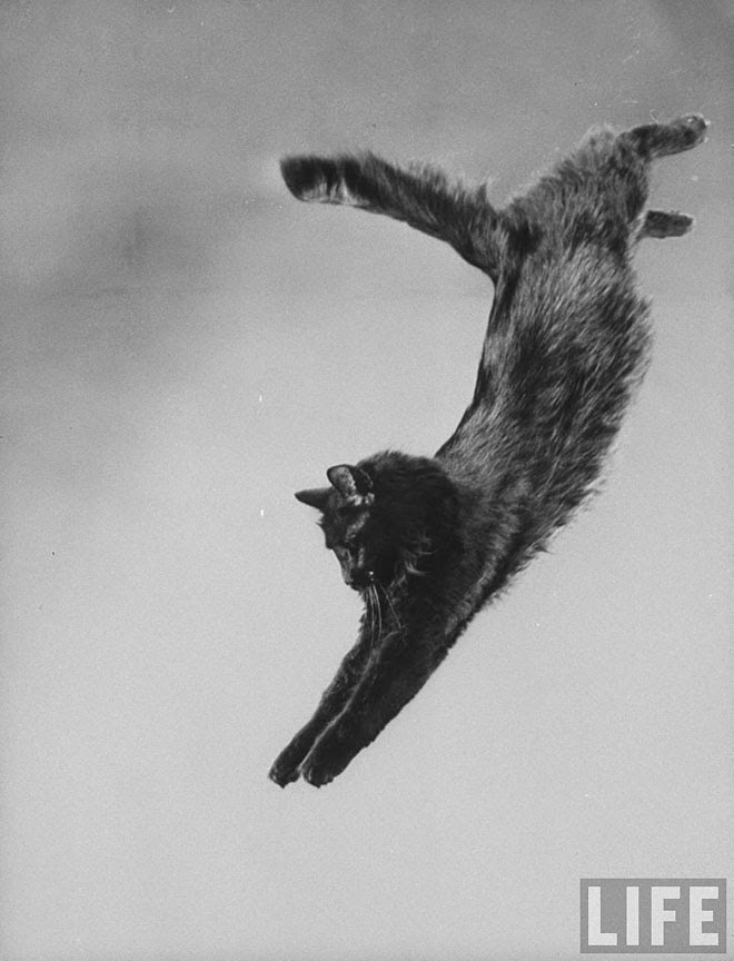 Blackie, Gjon Mili's Cat (1)