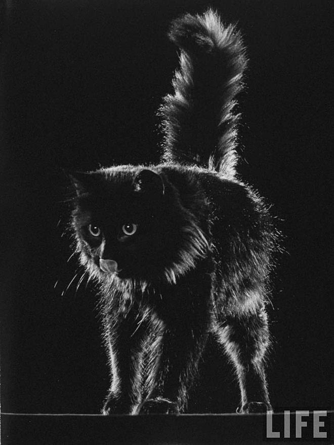 Blackie, Gjon Mili's Cat (6)