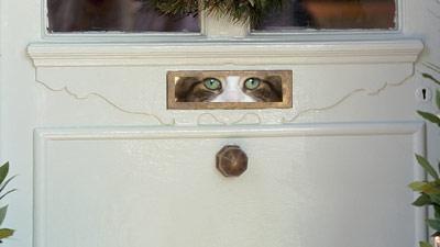 cat_photolibrary