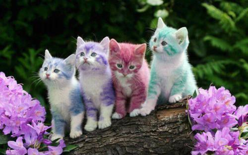 colorful-kittens-animals-31652537-500-312