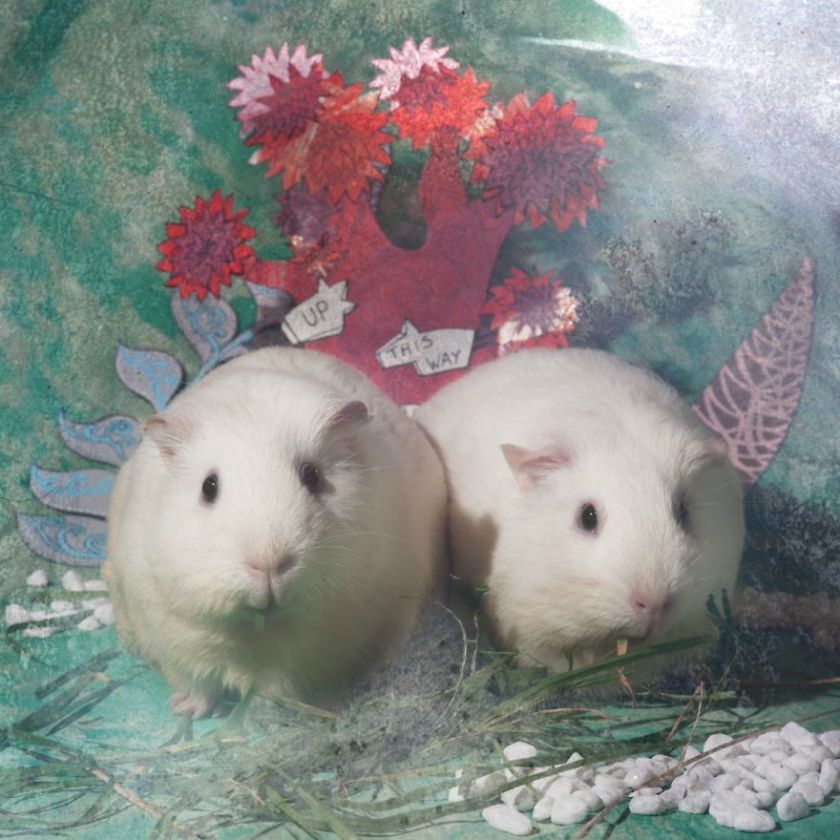 From-labs-to-Wonderland-dozens-of-rescued-animals-became-magic-models-in-Alice-style5__880