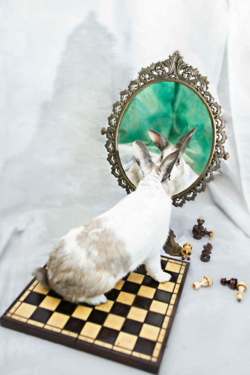 From-labs-to-Wonderland-dozens-of-rescued-animals-became-magic-models-in-Alice-style__880