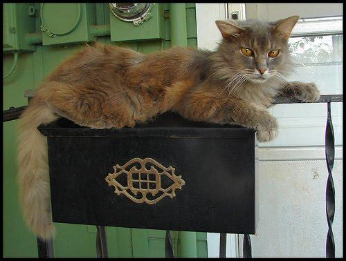 mailcat