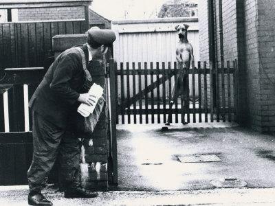 postman-and-dog