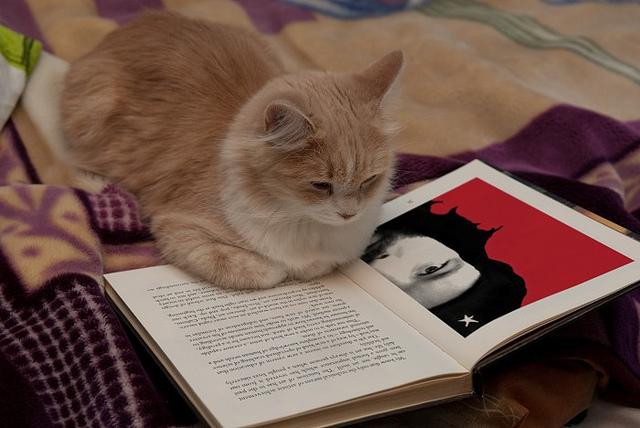 reading-cat-3