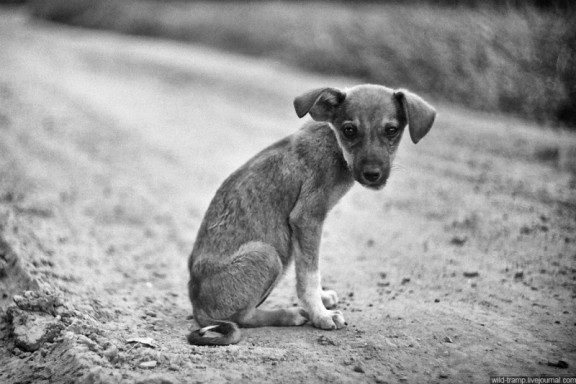 Dogs-that-live-on-the-street-2-576x384