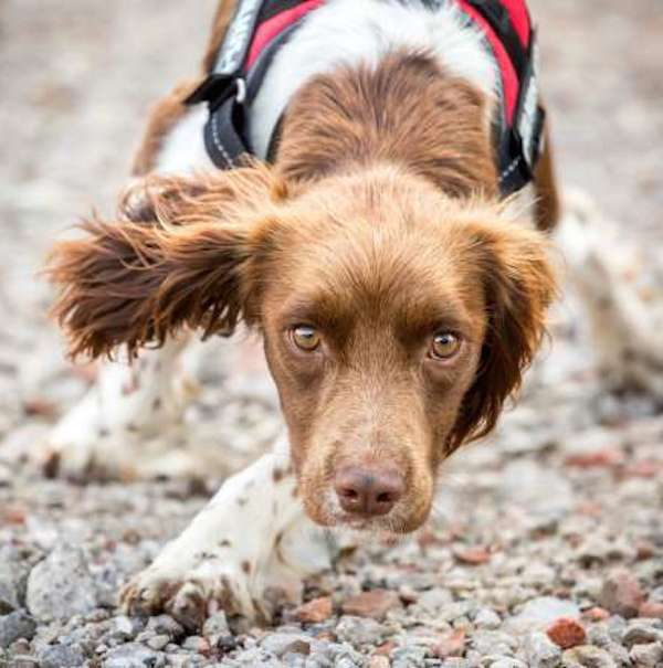 Assistance-dogs-and-dog-charities-2nd-place
