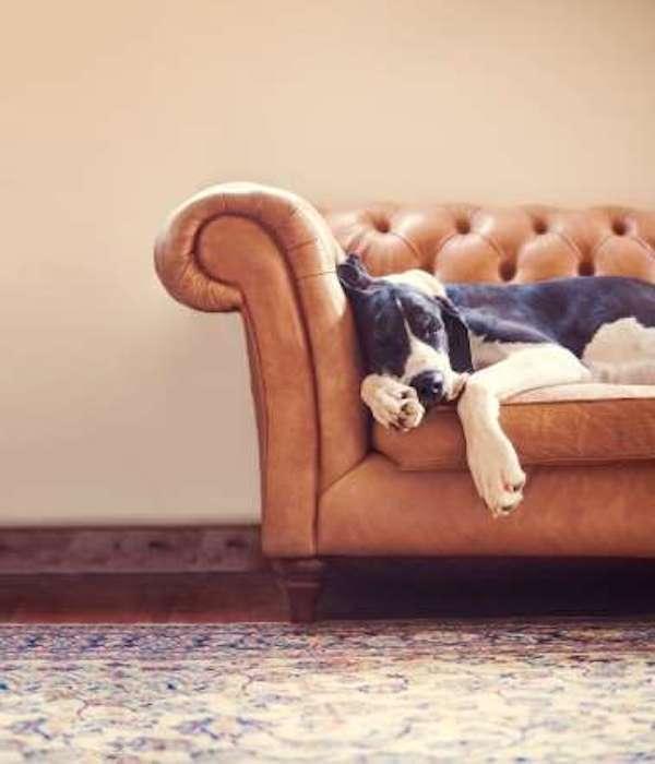 dog-portrait-2nd-place