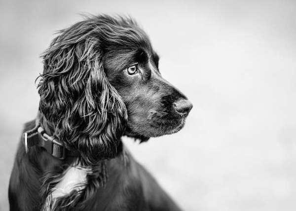 Dog-portrait-3rd-place