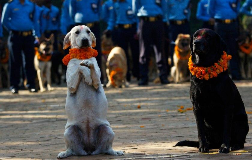 diwali_festival_1026_15