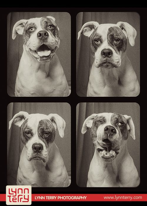 dogs-in-photo-booths-by-lynn-terry-1